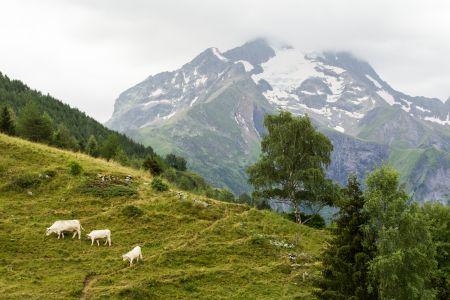 Track Walk - EDC Les Deux Alpes 2016_00000.jpg